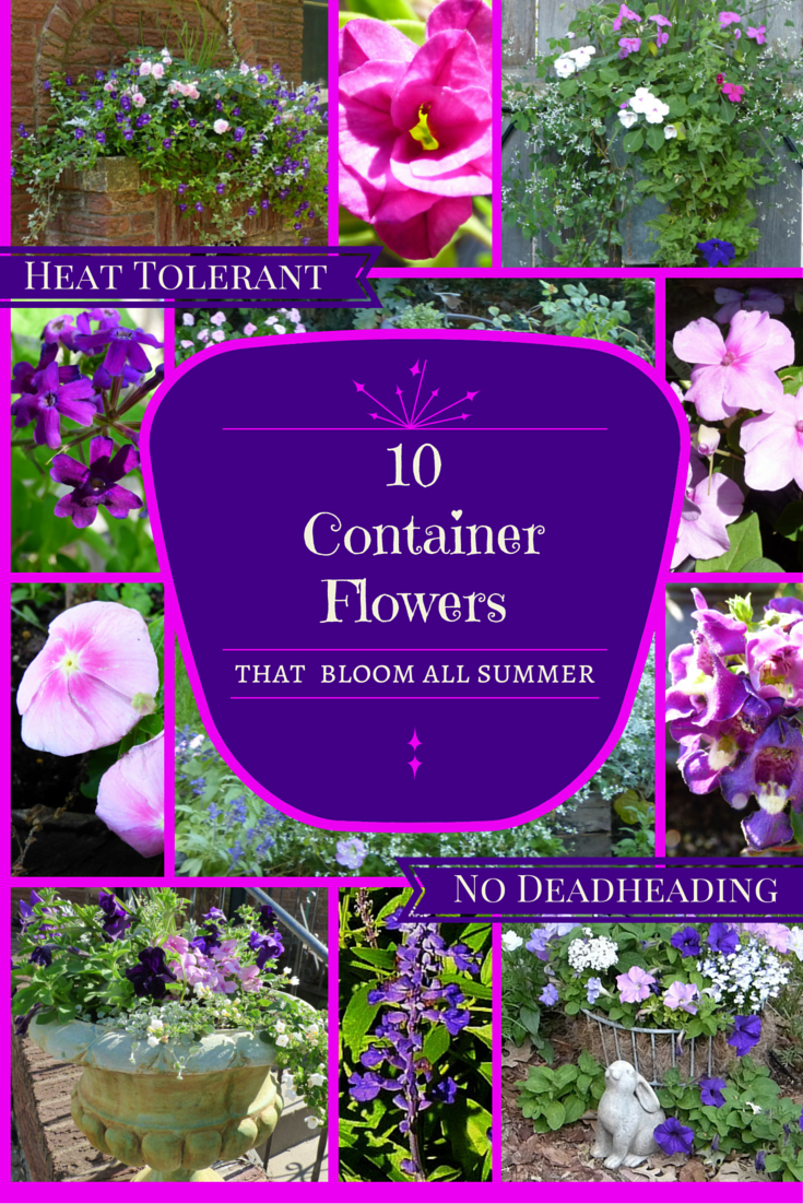 10 Container Flowers That Bloom All Summer Little Tudor On The Prairie