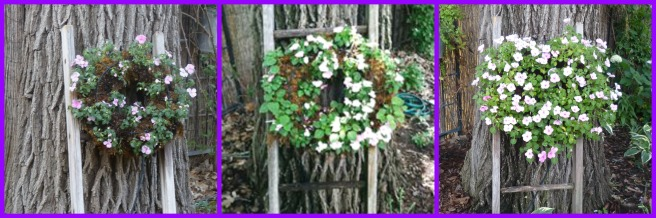 impatiens wreath using drip irrigation