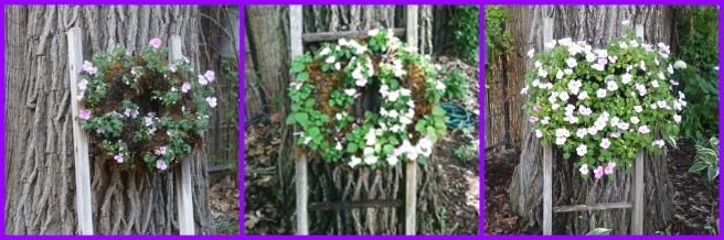 impatiens wreath using drip irrigation