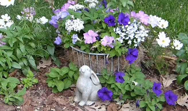 petunias with bunny