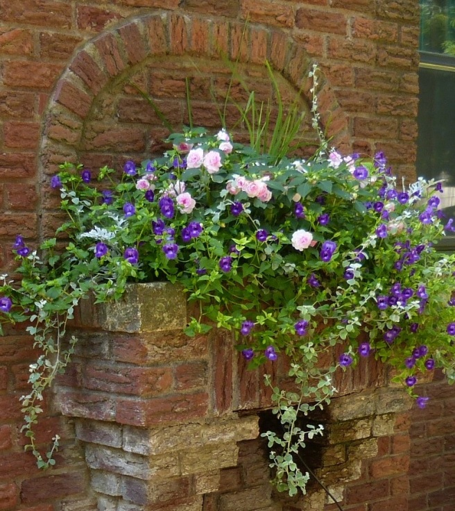 Torenia and Double Impatiens in a Brick planter