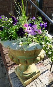 Urn with petunias, impatiens, euphorbia, dusty miller, dichondra, spike